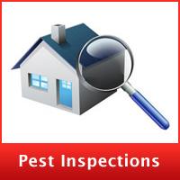 pest-inspection