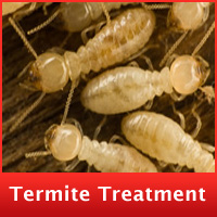 termite-treatment