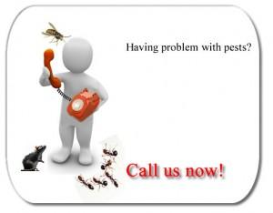 problem with pest1
