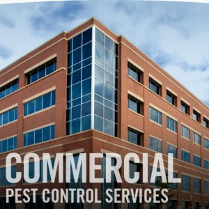 commercial pest control services