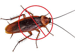 images-cockroach