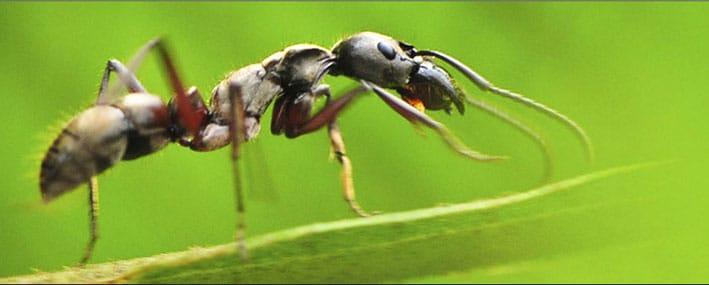 ants4