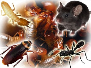 How Can You Find The Most Effective Pest Control Services?