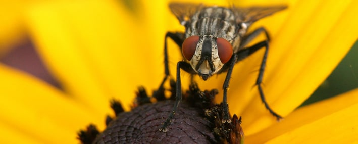 The Importance Of Flies Control Service
