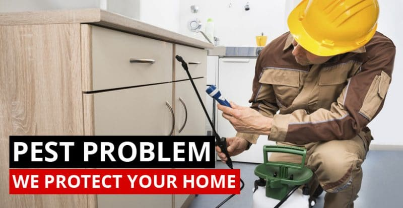 home pest control Perth