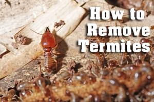termite inspection Perth WA