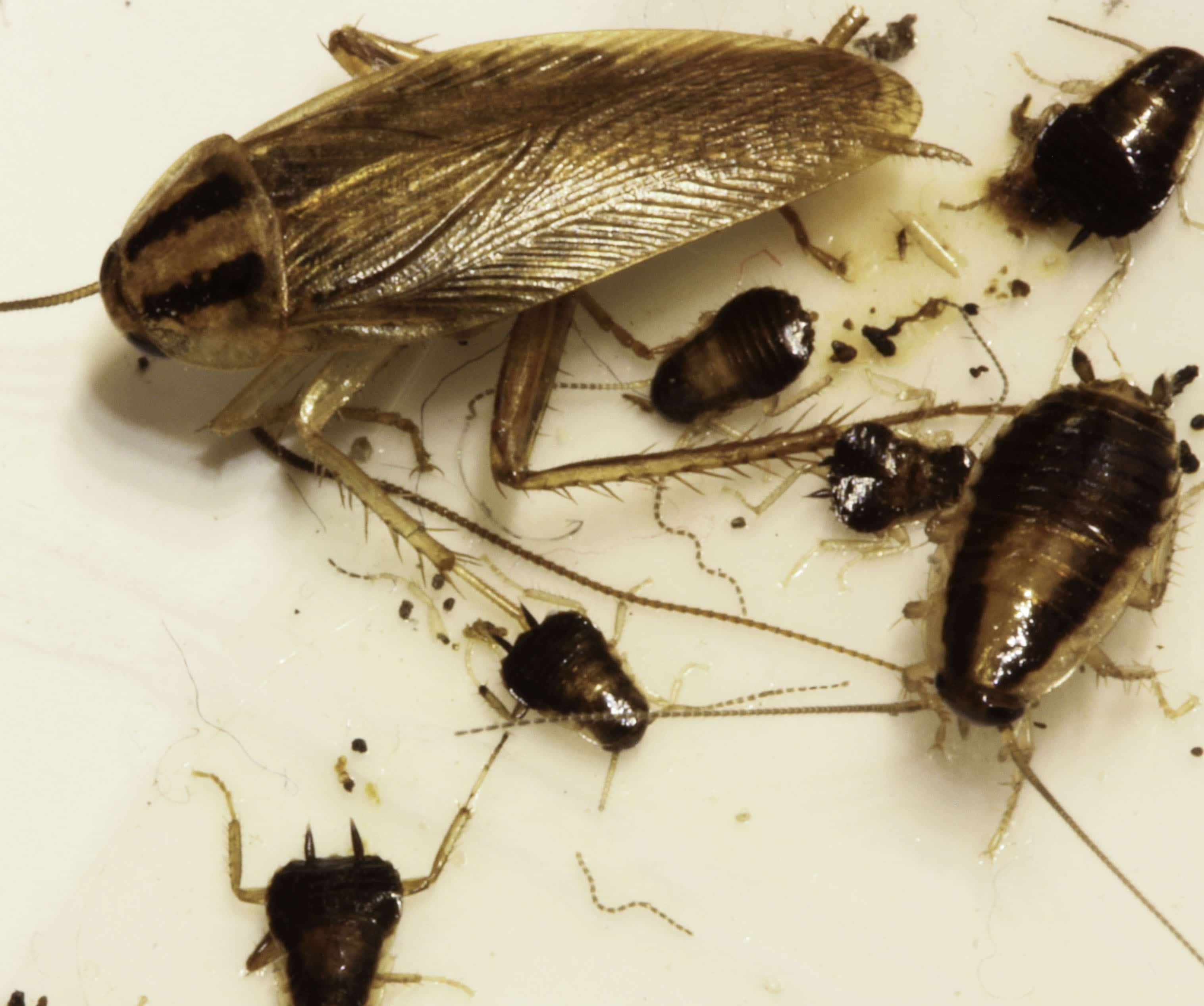 Roaches In Car Seat