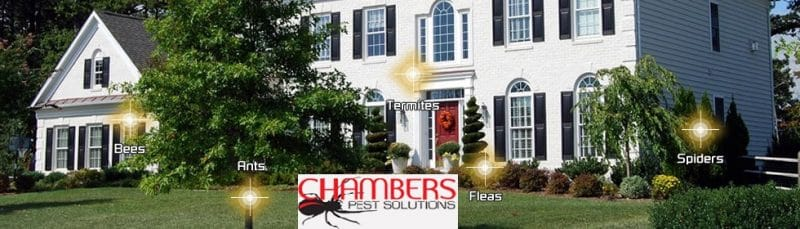 Chambers Pest Control