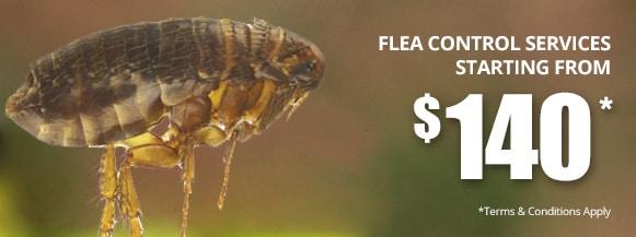 fleas control Perth