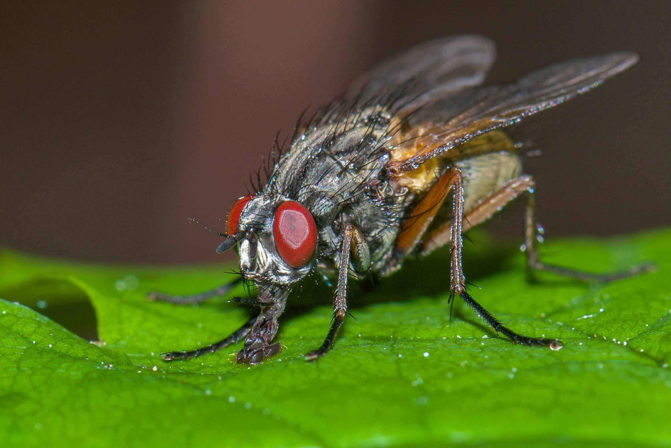 Pest Control Services : Prevent flies from spreading germs with pest control service