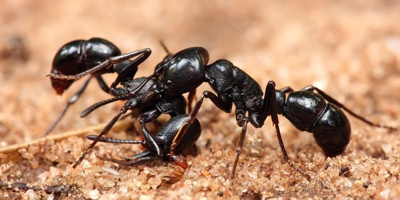 ants removal Perth